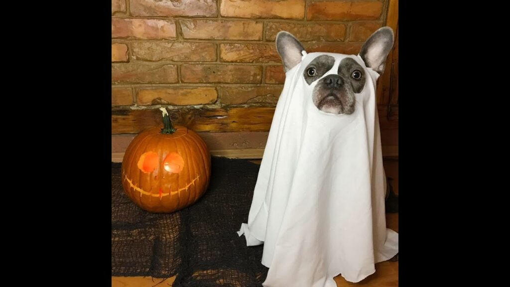 12 Funny & Ridiculous French Bulldog Halloween Costumes