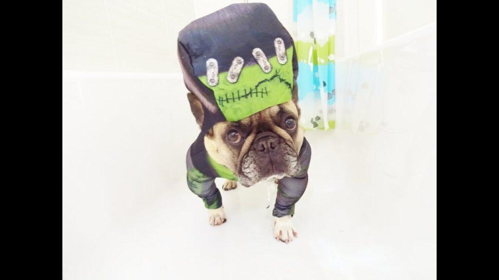 A French Bulldog Halloween Tale