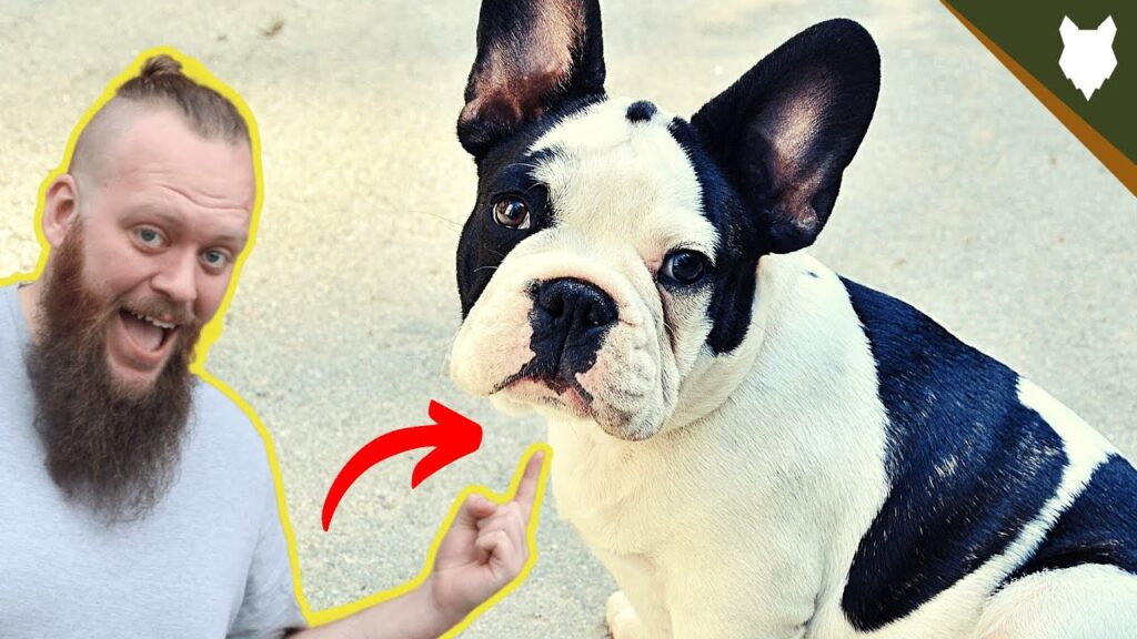 BEST PRODUCTS FOR YOUR FRENCH BULLDOG