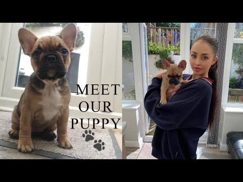 BRINGING HOME OUR 8 WEEK OLD FRENCH BULLDOG PUPPY | FIRST DAY AT HOME