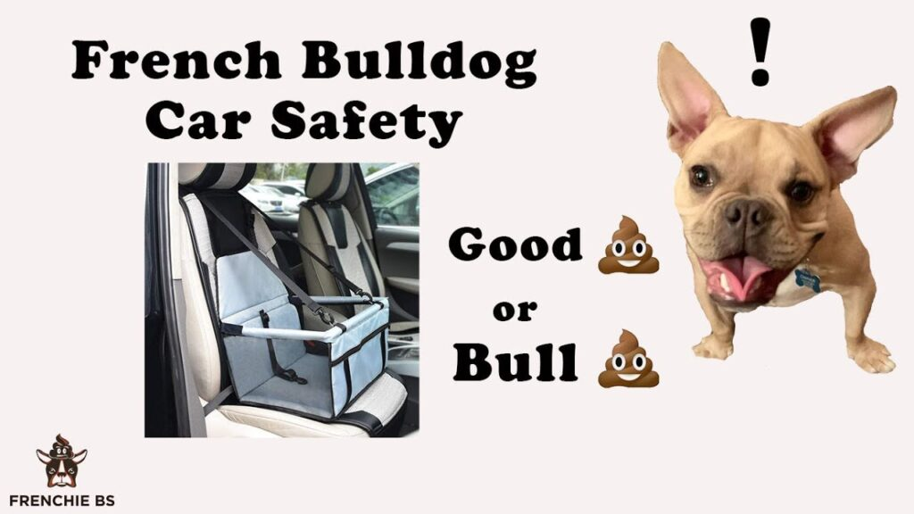Best Way To Keep a French Bulldog Safe in a Vehicle?