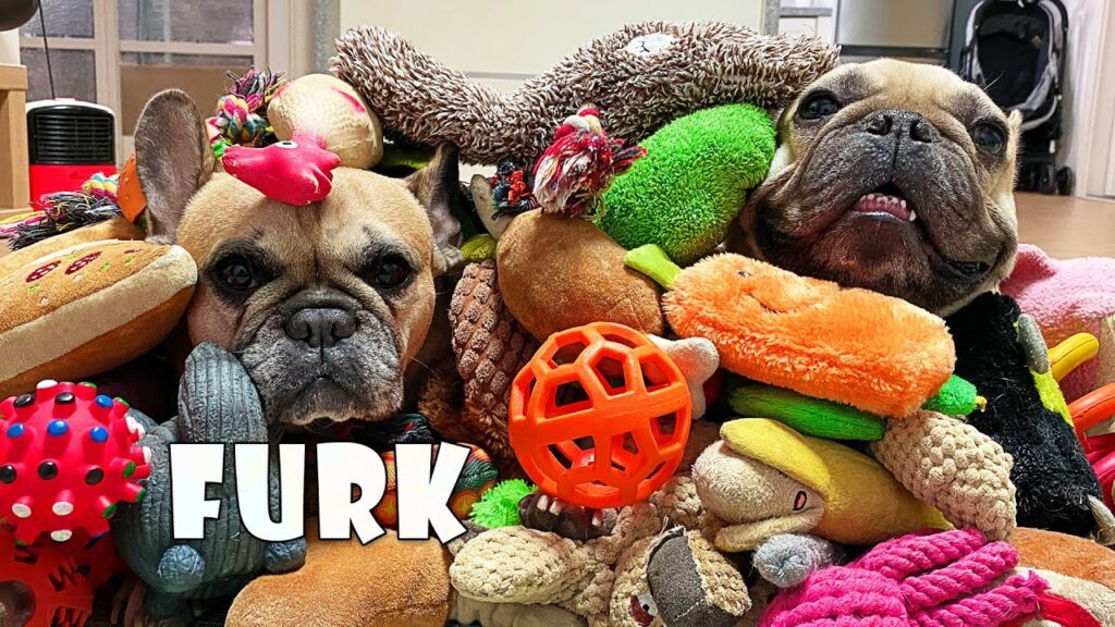 Big SURPRISE For My Dogs | Throwing Out My French Bulldog's Toys