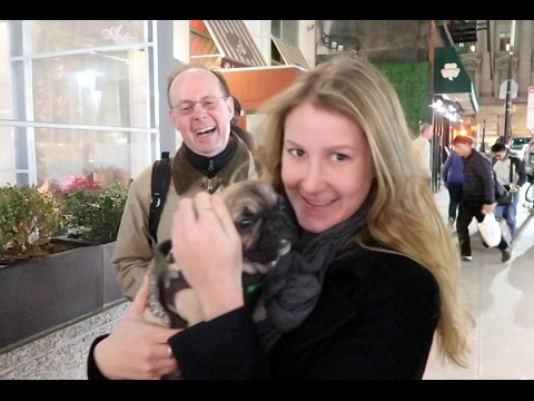 FRENCH BULLDOG PUPPY | CHRISTMAS DELIVERY IN NEW YORK