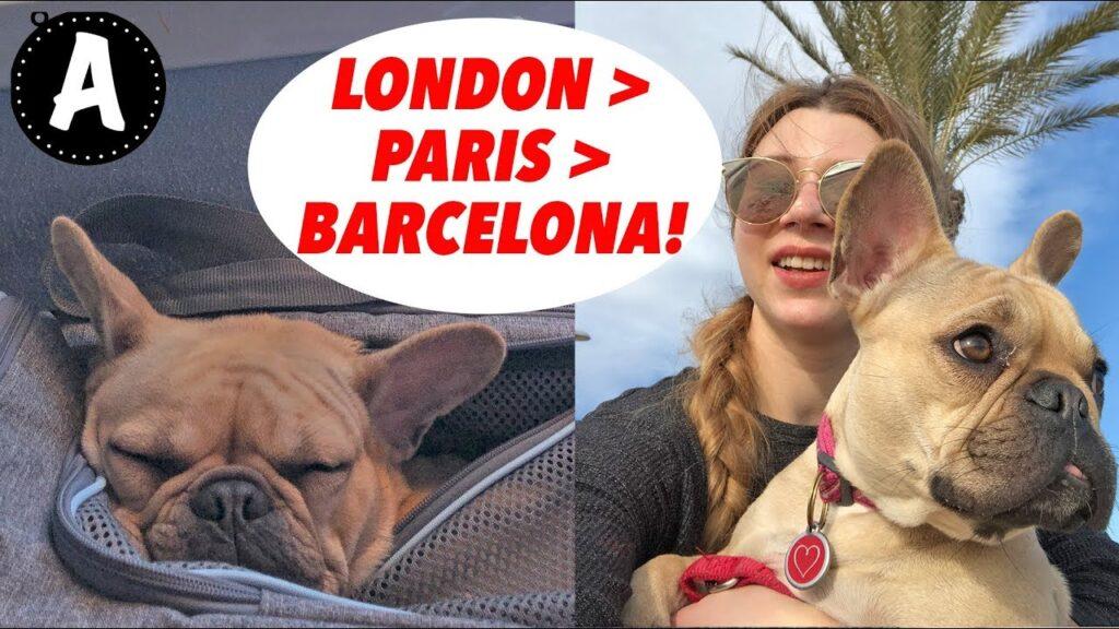 FRENCH BULLDOG TRAVEL | LONDON TO BARCELONA