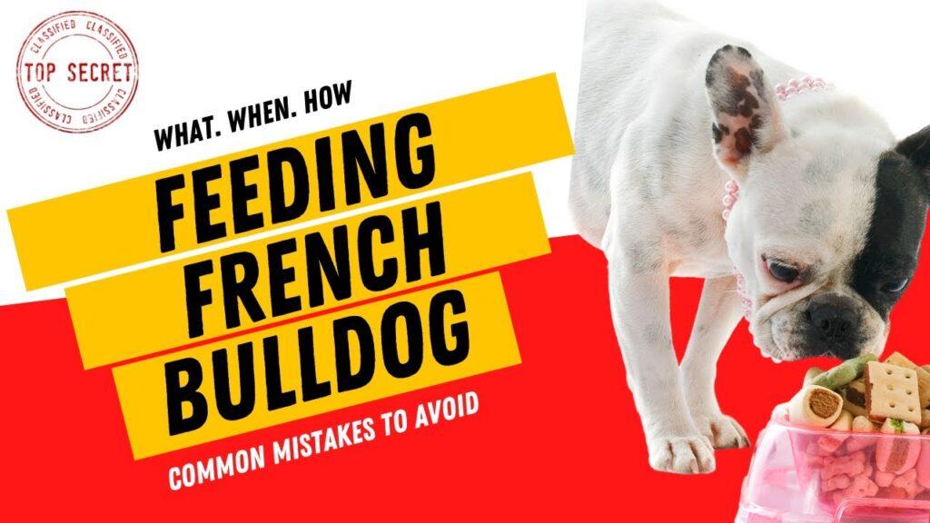 Feeding French Bulldog Puppy – What When How