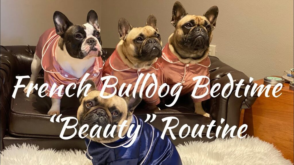 """French Bulldog Bedtime """"Beauty"""" Routine"""