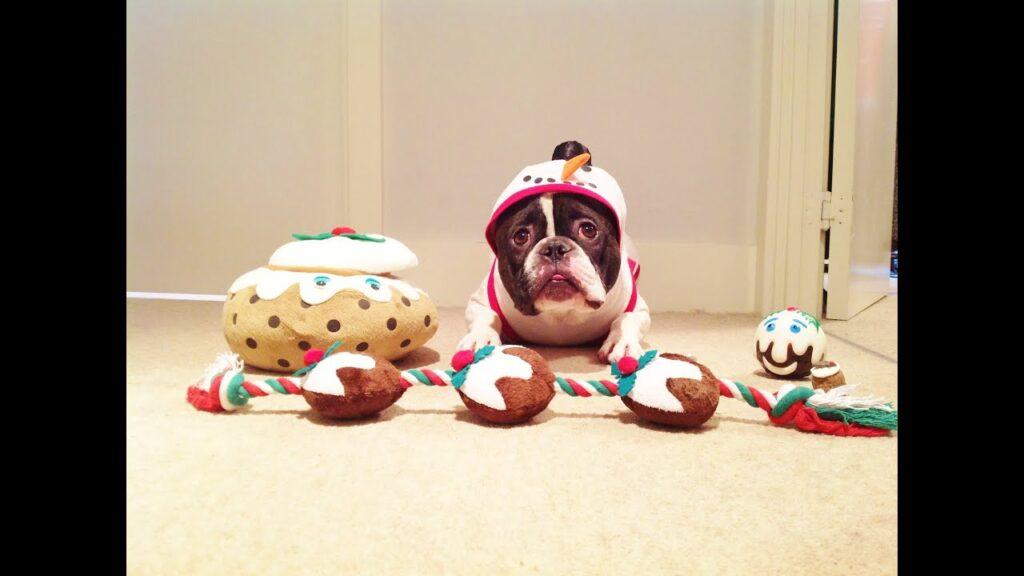 French Bulldog Christmas Movie