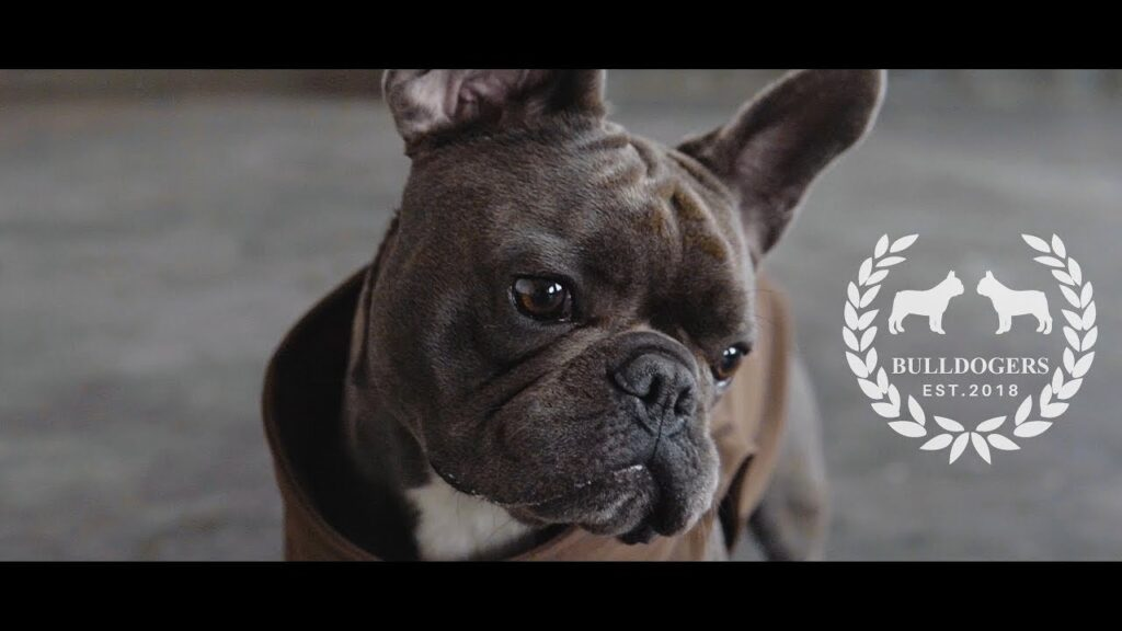 French Bulldog Clothing | Bulldogers.com (est.2018)