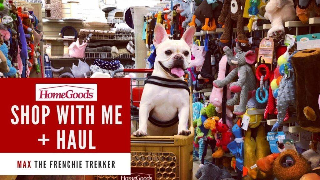 French Bulldog Goes Shopping at HomeGoods + Haul | Frenchie Trekker TV