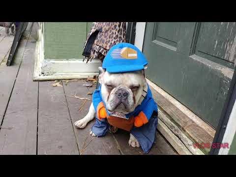 French Bulldog Halloween Party
