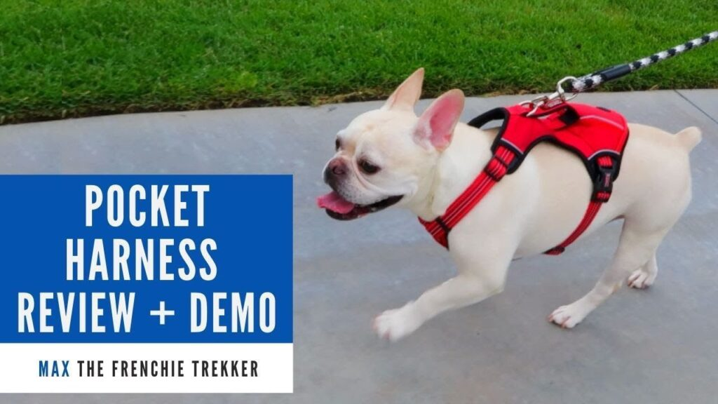 French Bulldog KONG Reflective Pocket Dog Harness Review + Demo | Frenchie Trekker TV