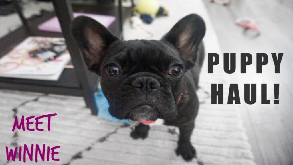 French Bulldog Puppy Haul! | Meet Winnie!