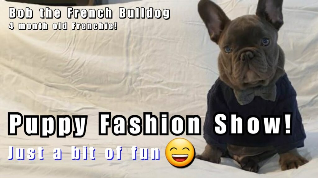 Frenchie Puppy Clothes