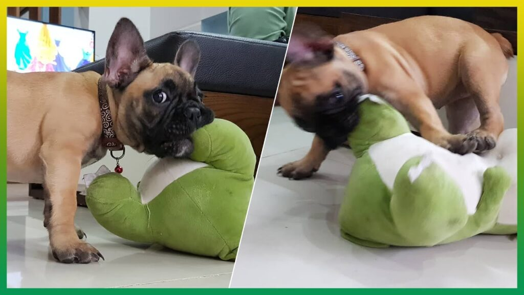 Frenchies Playing Stuffed Dinosaur Plush Toy / Funny French Bulldog Puppies / Life of Bulldog #2