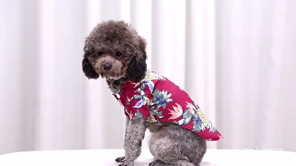 Hawaiian Style Dog Clothes French Bulldog Pet Clothes Summer Pet Clothing for Small Medium Dogs Pupp
