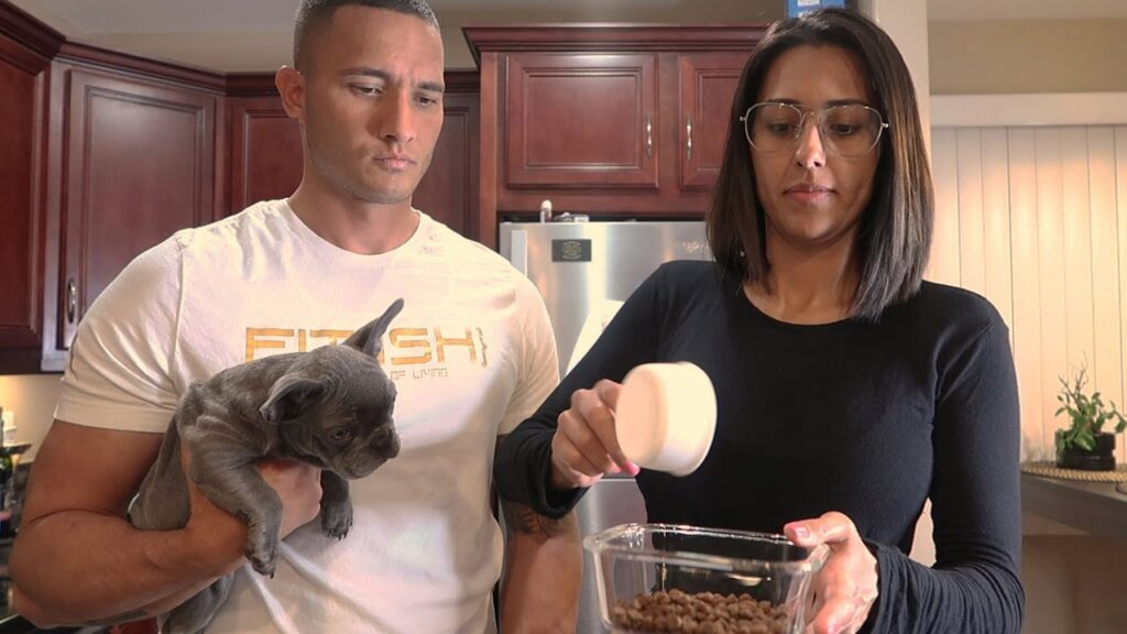 How To Feed Your Frenchie Puppy (french bulldog) | w/KOCILLA