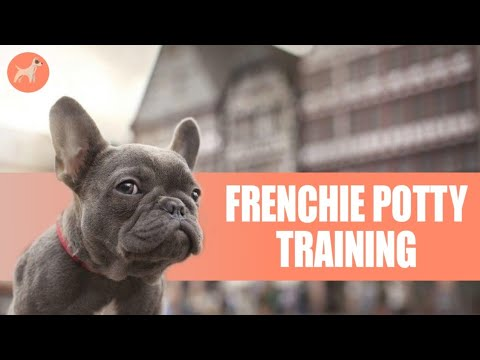 How to Potty Train a French Bulldog Puppy: 5 Super Effective Tips With Step By Step Instructions