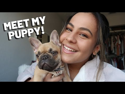 I FINALLY GOT A PUPPY!!! (meet my 3-month-old French Bulldog!)