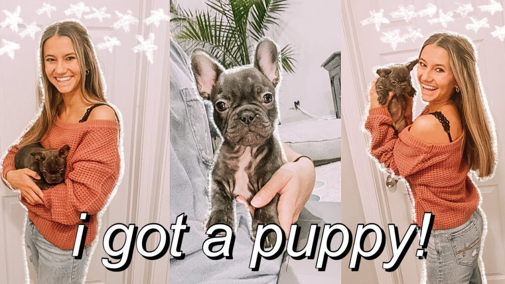I GOT A PUPPY! bringing home my 8 week old french bulldog puppy! | first days home + NAME REVEAL!