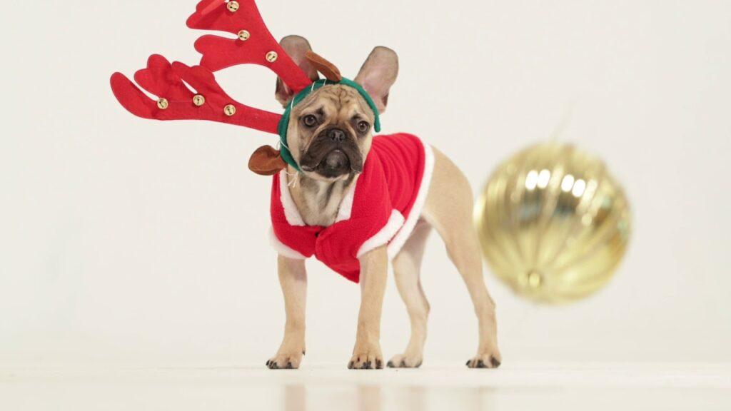 Lazy French Bulldog Christmas