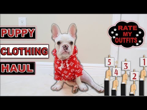 NEW PUPPY CLOTHING HAUL RATE CLOUD'S OUTFITS!!