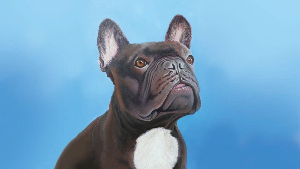 Pet portrait: Leo the French Bulldog