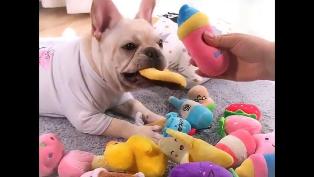 Plush French Bulldog Toys by Frenchie World