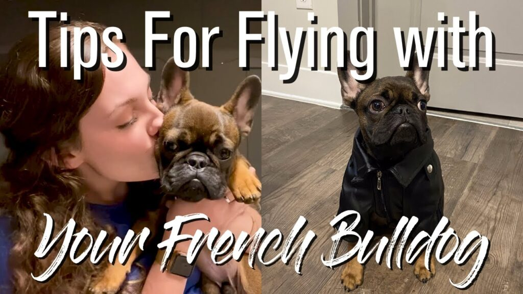 Tips For Flying With Your French Bulldog + What To Bring