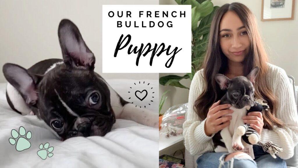 WE GOT A FRENCH BULLDOG PUPPY!! First Week Home!