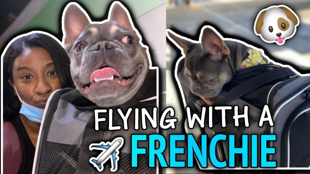 What Its Like To Fly With A Dog…🐶✈️ | French Bulldog | Travel VLOG