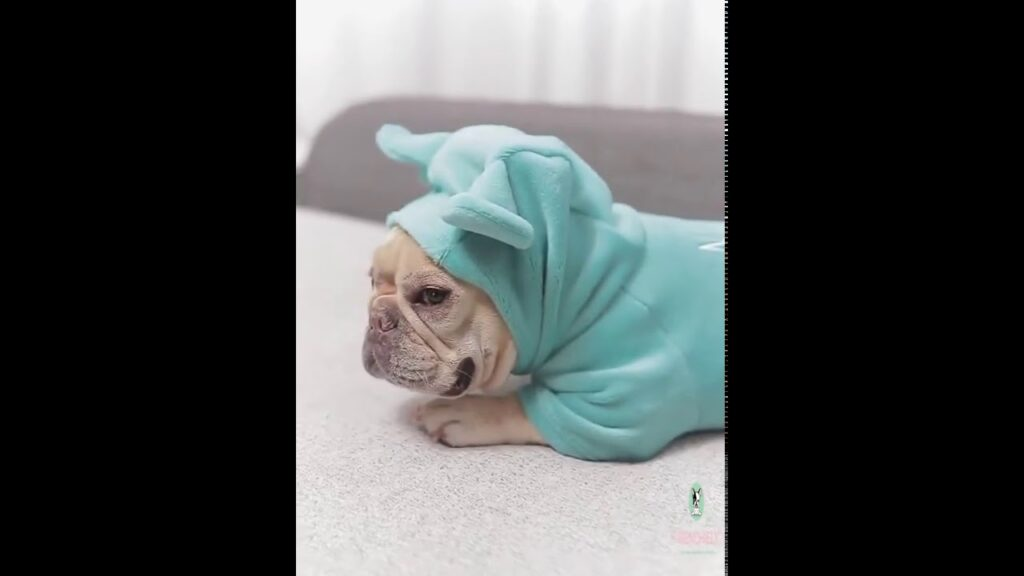 dog puppy winter pajamas pjs with hood