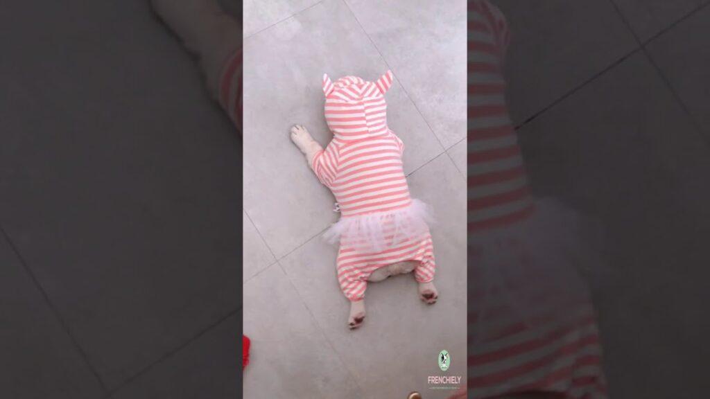 french bulldog pajamas PJs for medium dogs