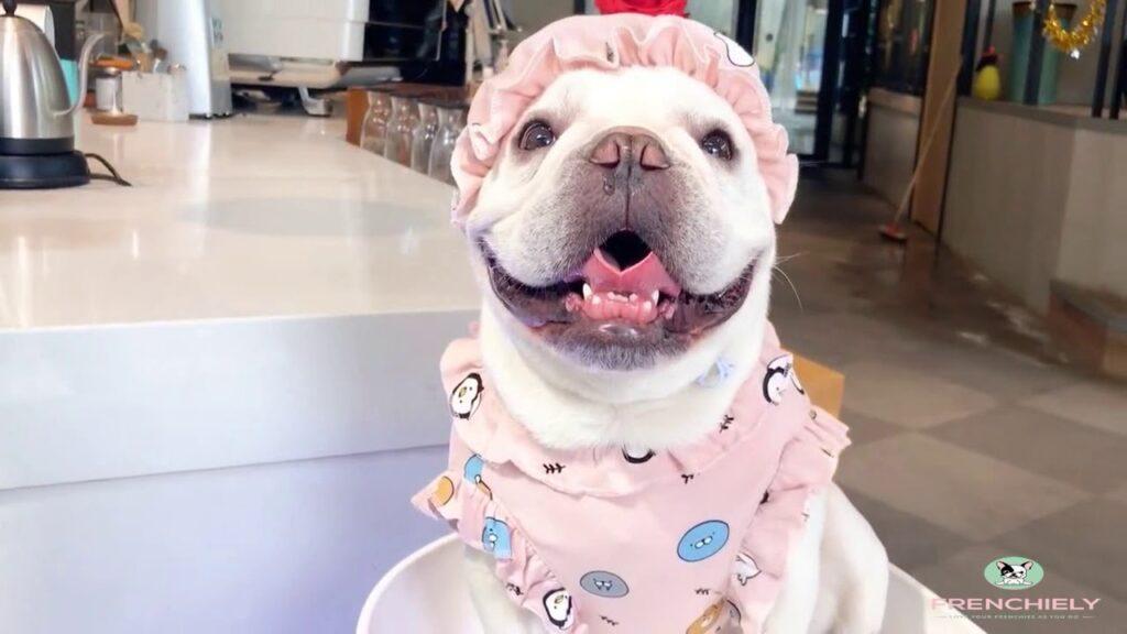 french bulldog puppy pajamas PJs