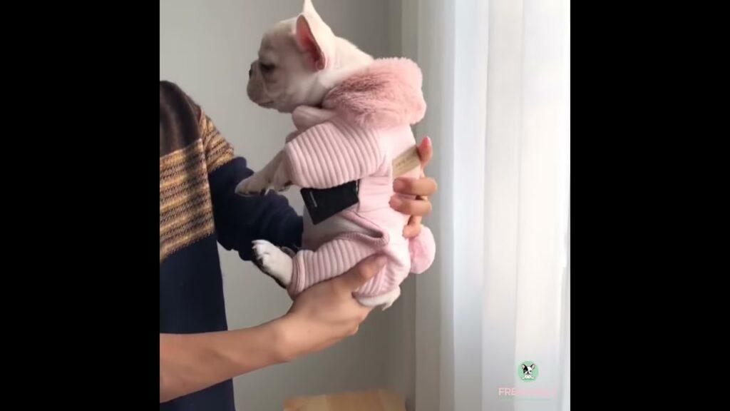 french bulldog puppy winter warm pajamas